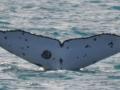 a-whale-tail-close